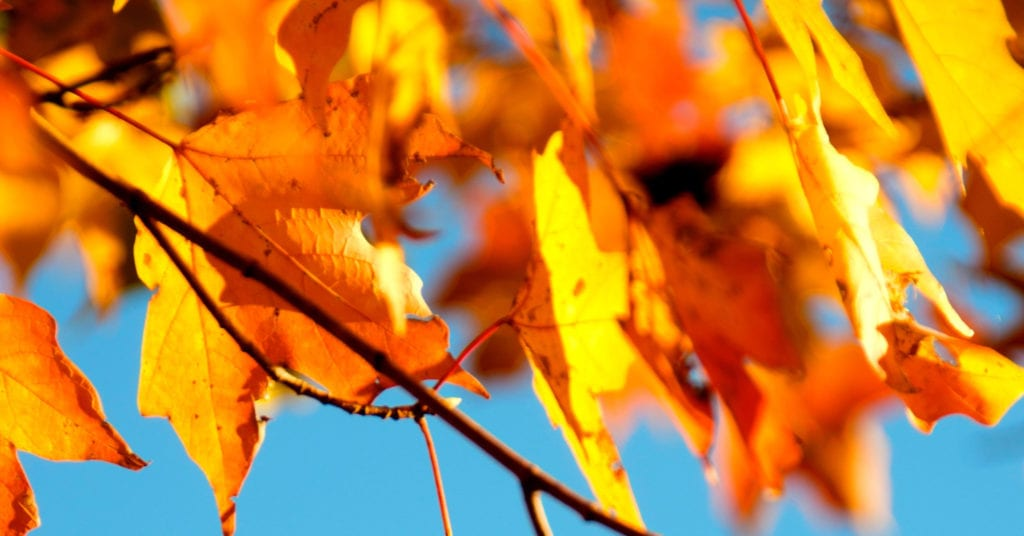 September autumn leaves The Content Consultancy